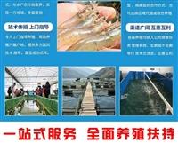 南美白对虾养殖技术指导