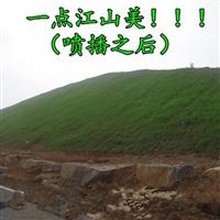 边坡种草绿化赤壁经销商