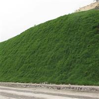 護坡綠化草籽噴種機清遠的用途