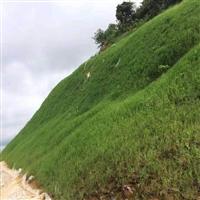 坡面綠化邊坡福州經銷商