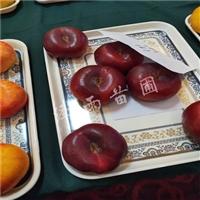 珍珠枣油桃树苗、珍珠枣油桃树苗供应价格