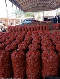 天津魔芋種子批發的價格