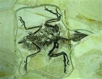 华豫之门前台座机电话多少 昆虫化石