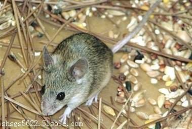 上海好的灭鼠公司 专业杀虫服务 安全无害