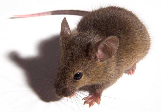 专业灭鼠上门消杀服务 专业杀虫服务 安全无害