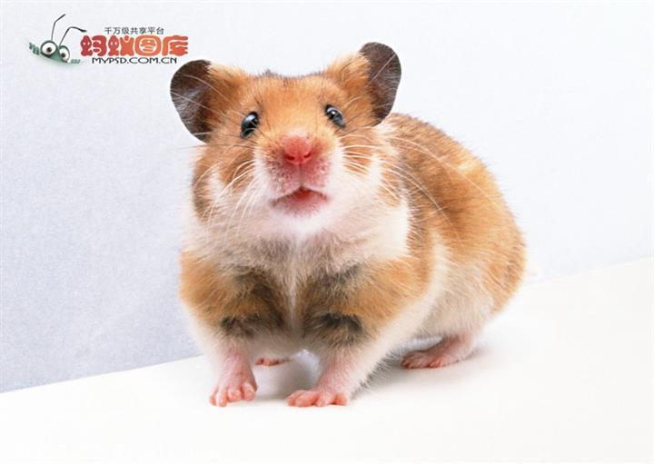 上门专业灭鼠 多年经验 上门服务