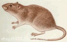 上海上门专业灭鼠公司 多年经验 上门服务