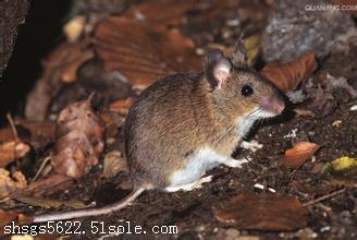 专业的灭鼠多少钱 专业杀虫服务 安全无害