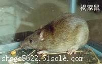 上海专业灭鼠 多年经验 上门服务
