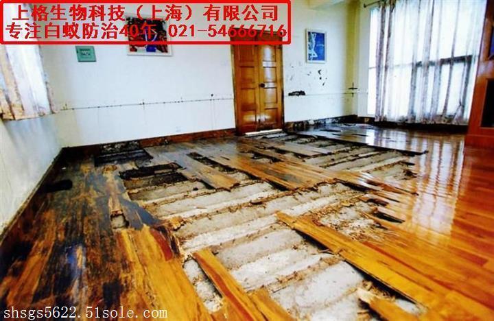 上海白蚁防治哪家好 经验老字号