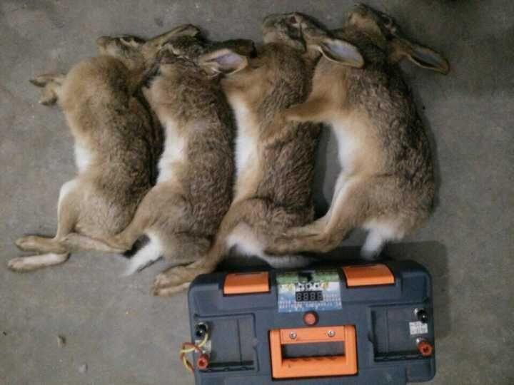 徐州捕猎机多少钱 全新升级捕猎工具