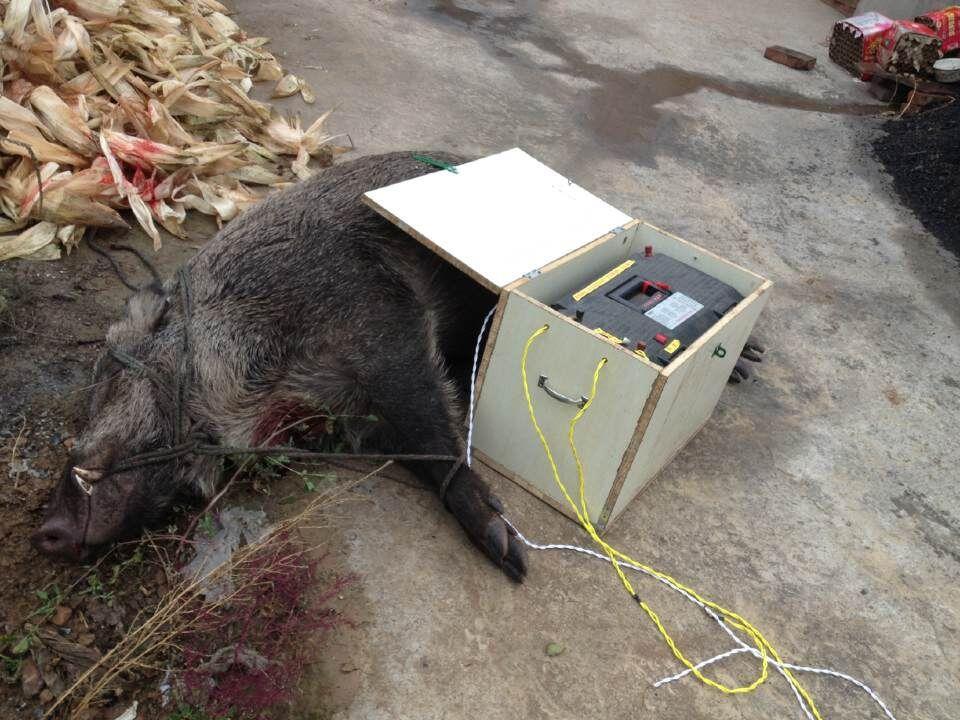 江西野猪机加盟费用